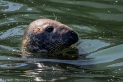 Seals_29