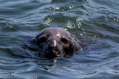 Seals_31