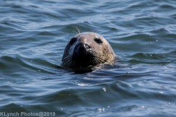 Seals_37