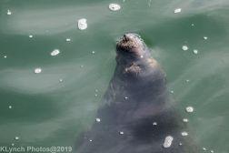 Seals_38