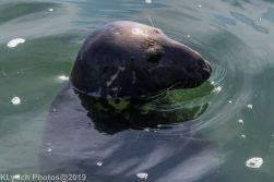 Seals_39