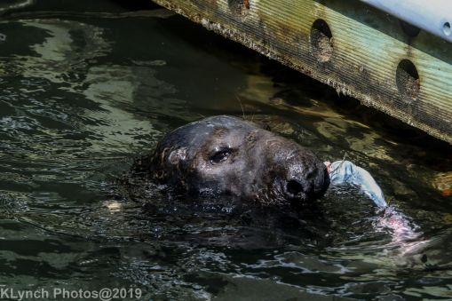 Seals_41