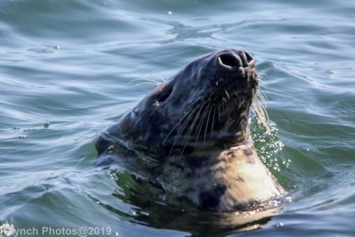 Seals_52