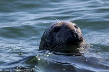 Seals_53