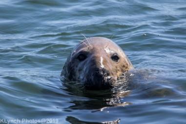 Seals_59