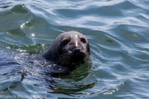 Seals_74