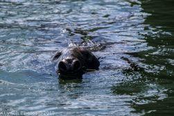 Seals_78