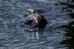 Seals_79