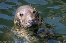 Seals_81