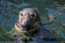Seals_82