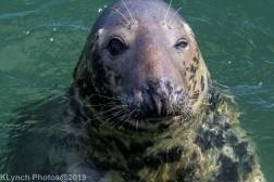 Seals_83