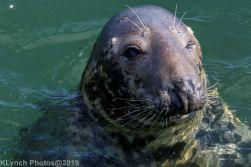 Seals_84