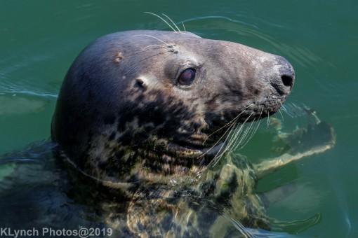 Seals_85
