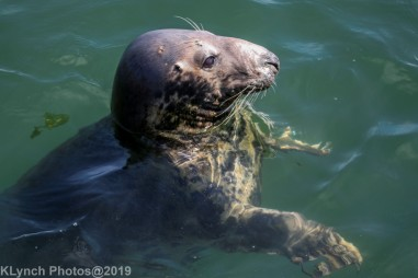 Seals_86