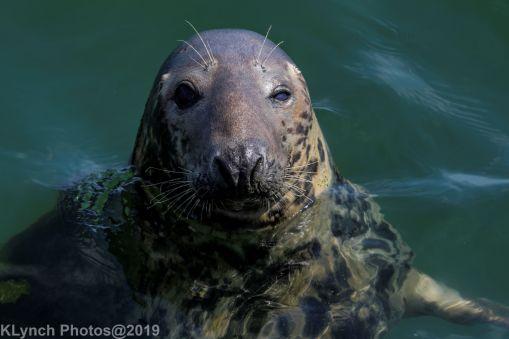 Seals_88