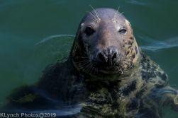 Seals_89