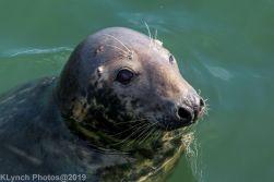 Seals_90