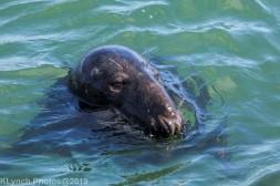 Seals_91