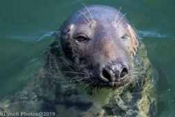 Seals_92