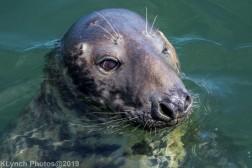 Seals_93