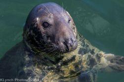 Seals_94