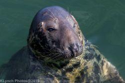 Seals_95