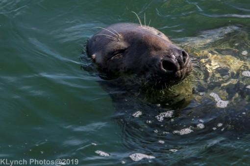 Seals_96