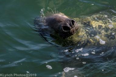 Seals_97