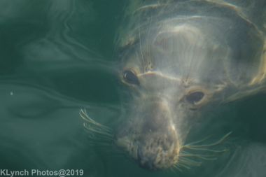 Seals_98