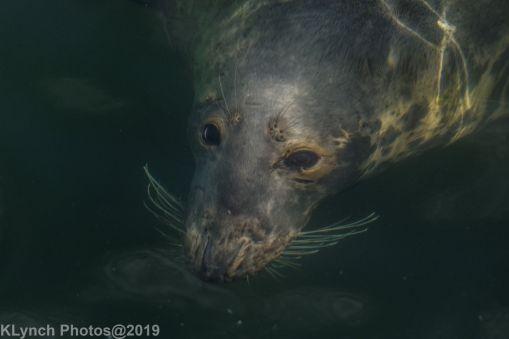 Seals_99
