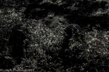 Cemetery_BlackandWhite_61