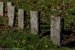 Cemetery_Color_17