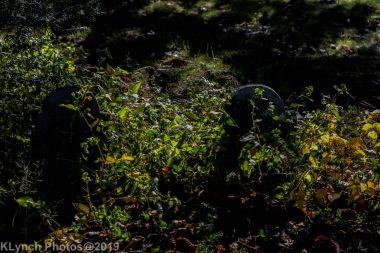 Cemetery_Color_61