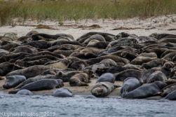 Seal island_1