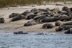 Seal island_2