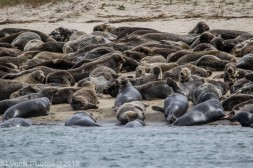 Seal island_3