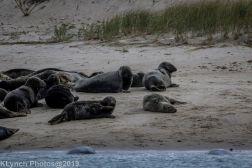 Seal island_4