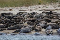 Seal island_5