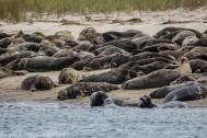 Seal island_6