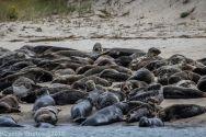 Seal island_7
