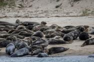 Seal island_8