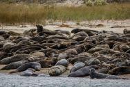 Seal island_9