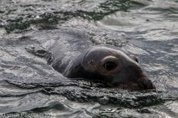 Seals_13