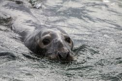 Seals_14