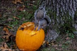 Squirrel_15