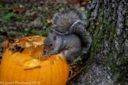 Squirrel_22