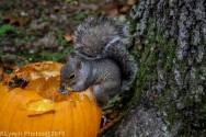 Squirrel_23