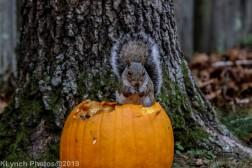 Squirrel_7