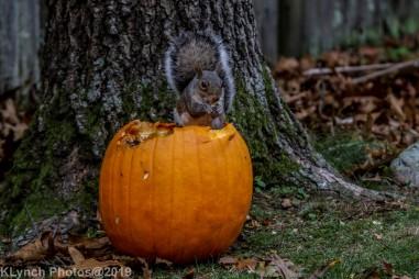 Squirrel_9