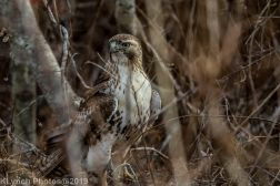 Hawk_14
